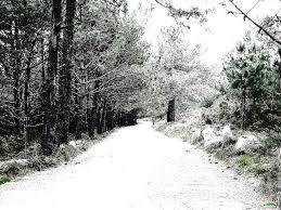 aa-camino de invierno